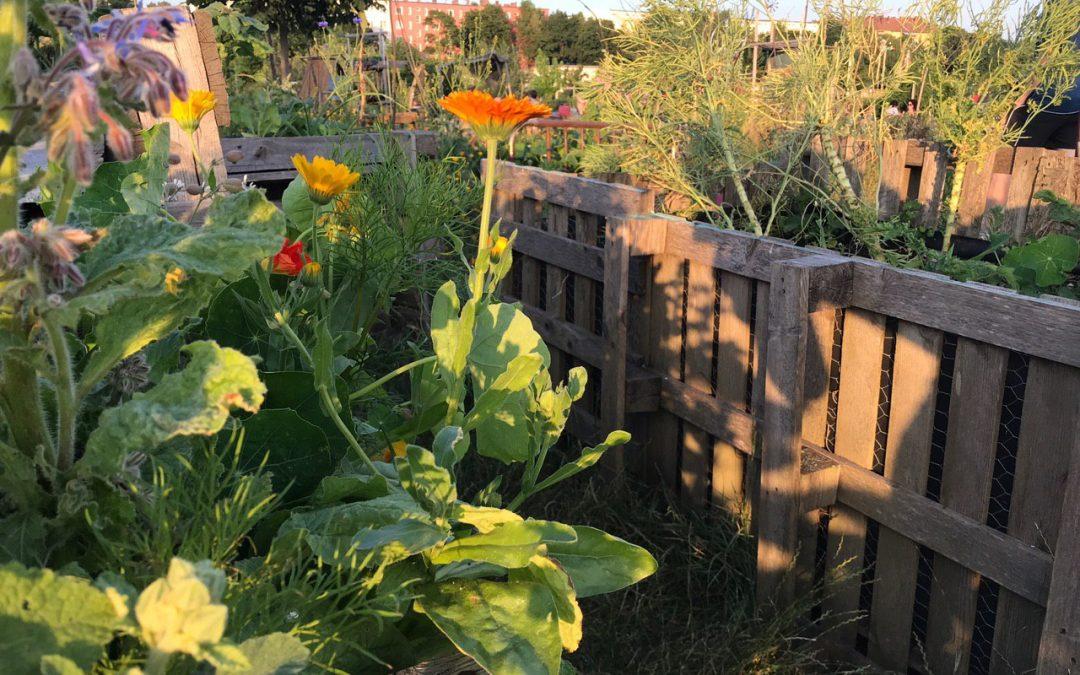 Crowdfunding Community Garden